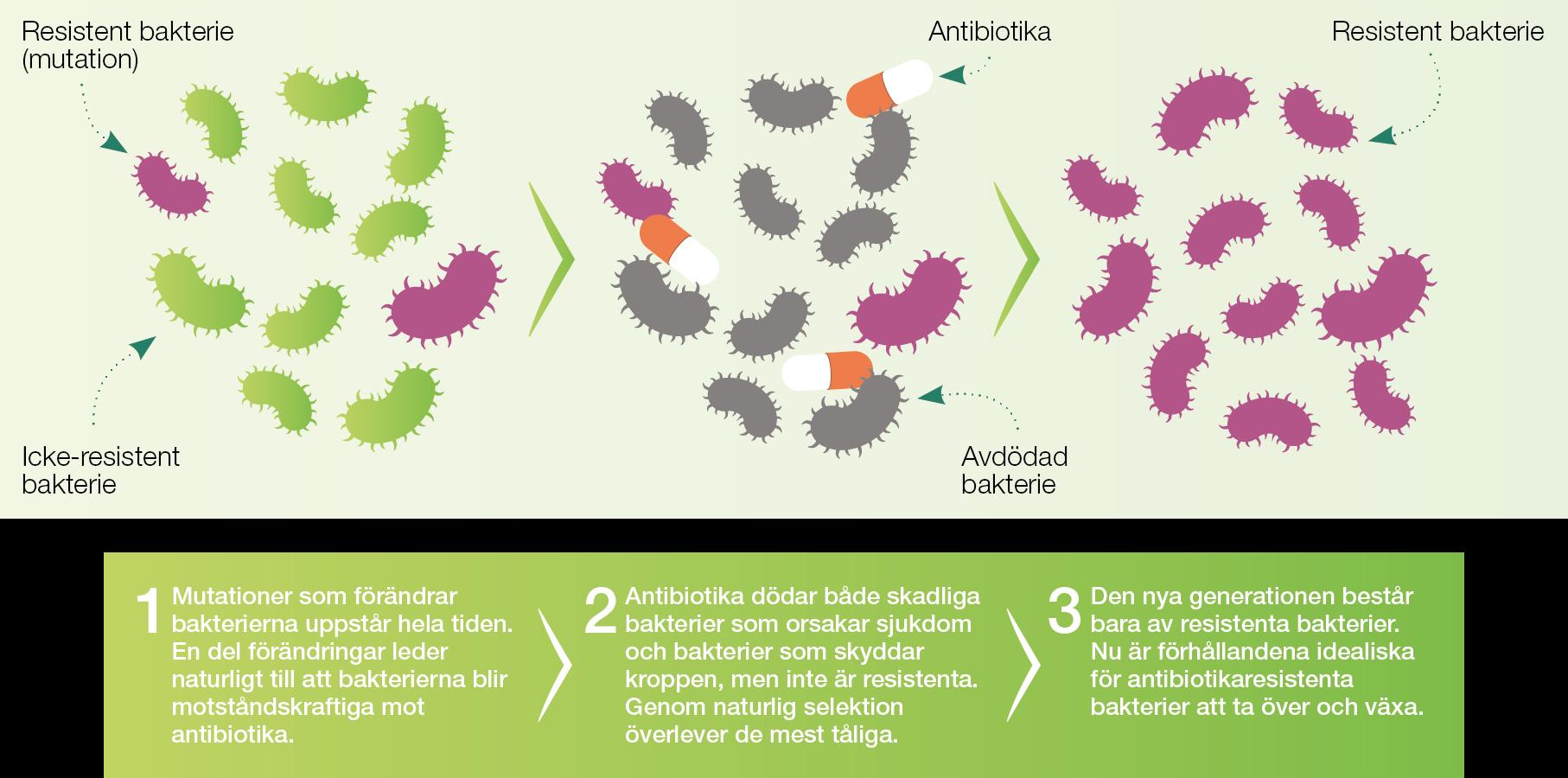 Bactiguard_antibiotikaresistens_amr